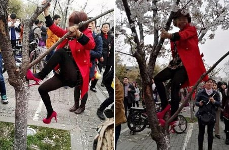 Chinese People Destroy Cherry Blossom Trees Just To Take The Perfect Selfie - World Of Buzz