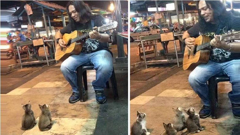 Malaysian Street Performer Goes Viral After Attracting Kittens With His Music - World Of Buzz 3