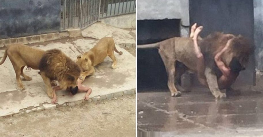 Man Strips Naked And Breaks Into Lion Cage In a Suicide Attempt - World Of Buzz