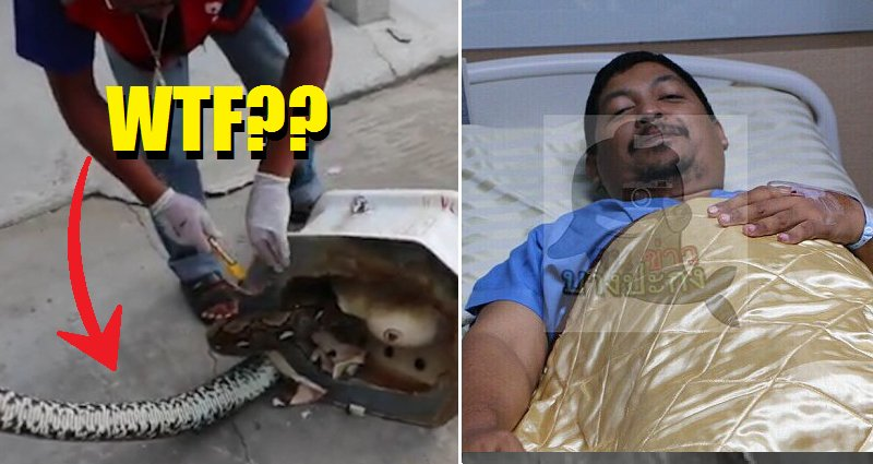 Thai Man's Genitals Gets Bitten by Python As He Was Using the Toilet - World Of Buzz 2