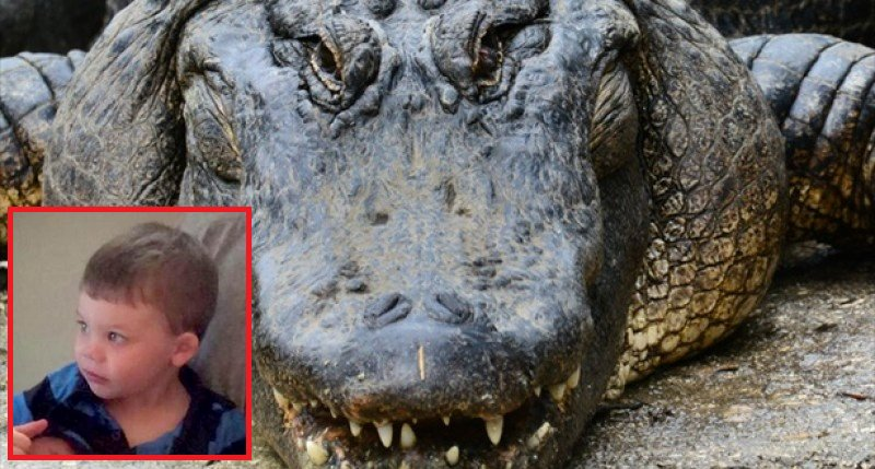 Alligator Grabs 2 Year-Old Child into Water at Disney World - World Of Buzz 1
