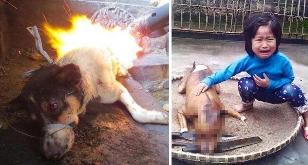 Finally, Yulin Government Cracksdown on Controversial Dog Meat Festival - World Of Buzz