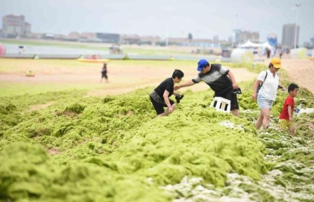 Covering Yourself In Algae Is The New Thing For Chinese Beachgoers - World Of Buzz 4