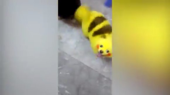 Taking it a bit too far, Pokemon fan turns their dog into Pikachu - World Of Buzz 1