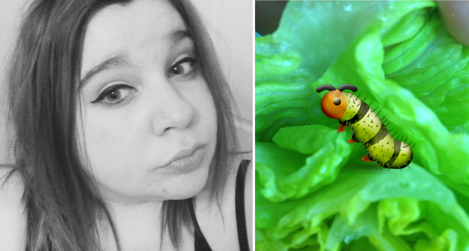 Epic Customer Service By Tesco To Lady Who Found A Caterpillar In Her Lettuce - World Of Buzz 8