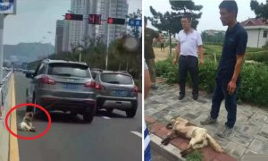 Owner tied Dog behind car and Dragged it to Death - World Of Buzz 5