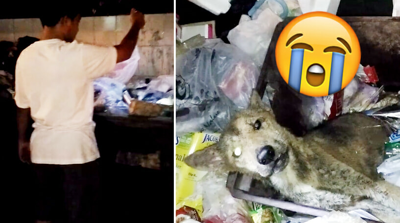 Shocking Act of Cruelty As Old Dog Found Whimpering In Pain As He's Left Abandoned For Good in Dumpsters in Sabah - World Of Buzz 2