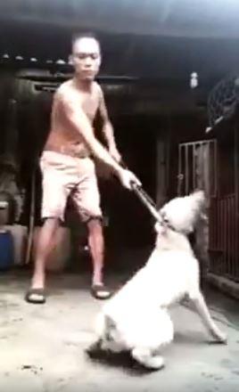 dog-2