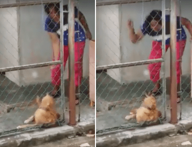 Viral Video Captures Woman In Johor Using Rotan On Her Dog As It Whimpers In Pain - World Of Buzz 5