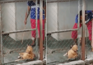 Viral Video Captures Woman In Johor Using Rotan On Her Dog As It Whimpers In Pain - World Of Buzz 6