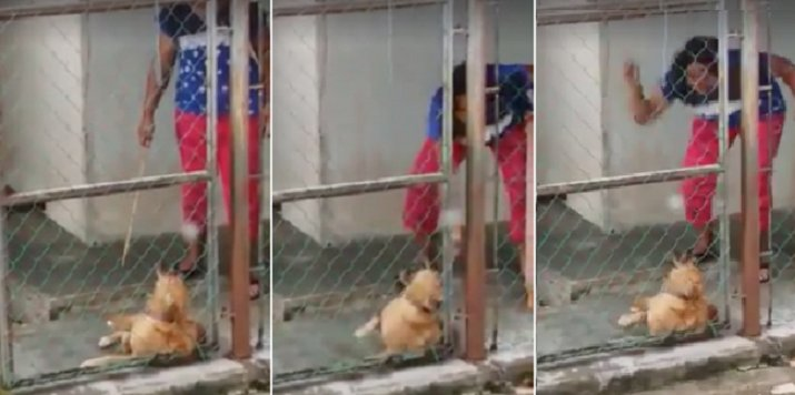 Viral Video Captures Woman In Johor Using Rotan On Her Dog As It Whimpers In Pain - World Of Buzz 7
