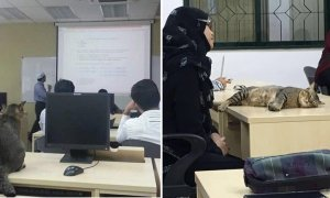 Cat Randomly Joins A Class in Malaysian University and It Quickly Went Viral - World Of Buzz 3