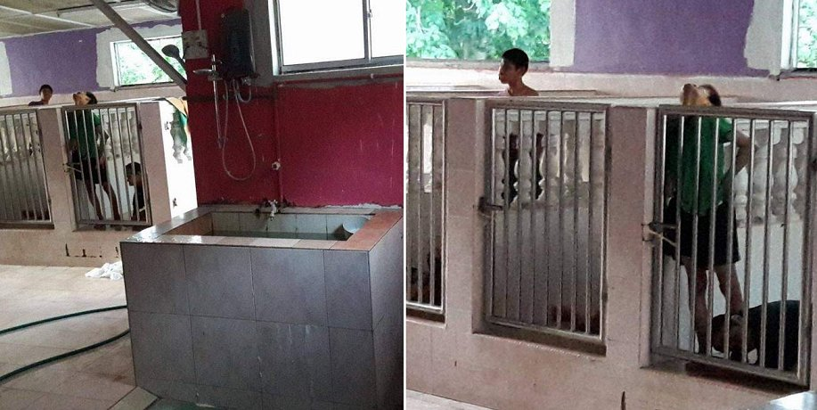 Malaysian Girl Discovers Shocking Scene Of Disabled Kids Locked Up In Cages Like Dogs - World Of Buzz