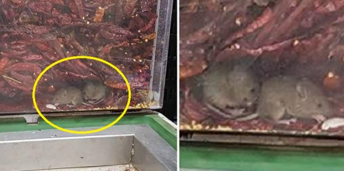 Netizens Are Completely Disgusted By Vermin Found In Supermarket's Chili Tanks - World Of Buzz 1