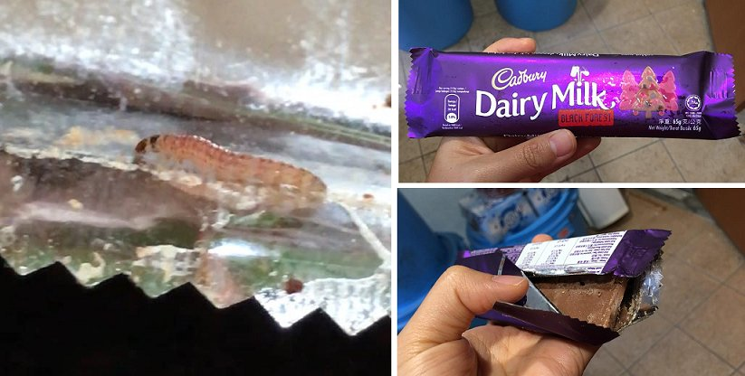 Malaysian Woman Finds 'Wriggly' Surprise In Her Cadbury Chocolate Bar - World Of Buzz 2