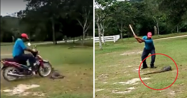 Netizens Enraged By Malaysian Man Mercilessly Running Over And Torturing Monitor Lizard - World Of Buzz