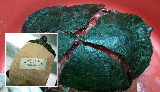 Cruel Man trampled and cracked tortoise shell. - World Of Buzz 5