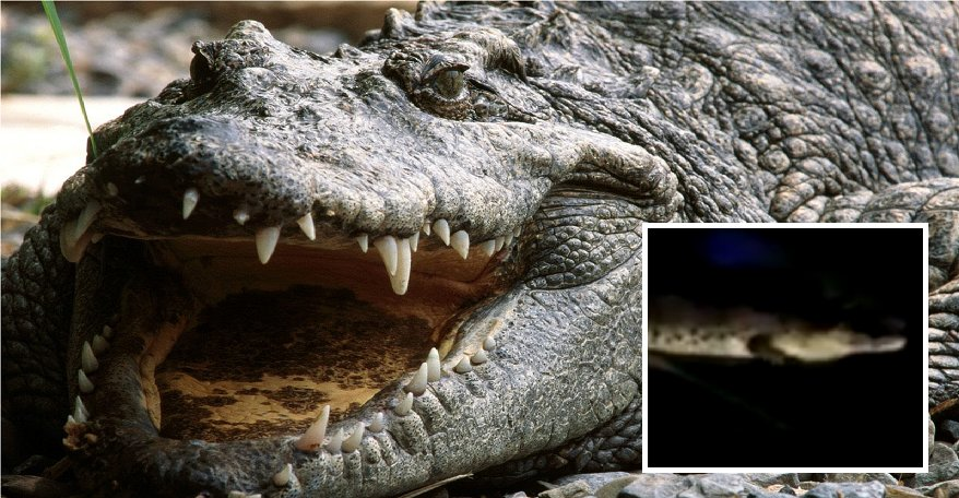 Malaysian University Students Finds A Whopping 7-Foot Crocodile On Campus - World Of Buzz