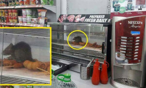 Malaysians Infuriated With 7-Eleven After Pictures of Rats Sitting In Food Warmer Went Viral - World Of Buzz