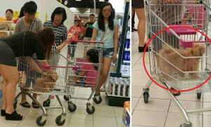 Netizens Are Outraged At Inconsiderate Family Who Placed Dog In Supermarket Trolley - World Of Buzz