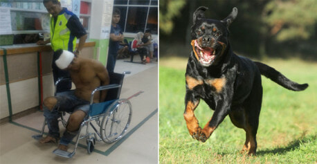 Man Climbing Over Wall Fell On The Groun After Rottweiler Charges Towards Him - World Of Buzz