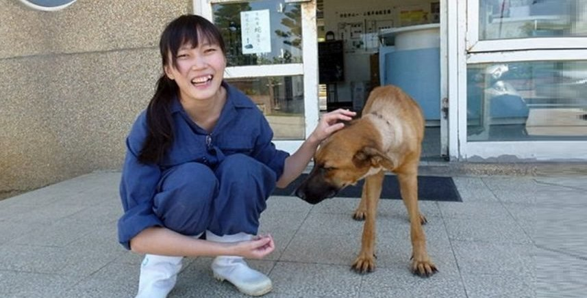 Taiwan Passes Law Banning Animal Abandonment After Vet Euthanized Herself - World Of Buzz 5
