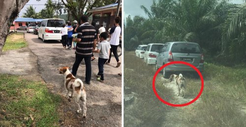 Faithful Dog Chases Behind Funeral Possessions For 3km To Follow Its Deceased Owner - World Of Buzz 1