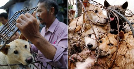 Indonesia's Dog Meat Market is Growing Steadily, Here's Why - World Of Buzz