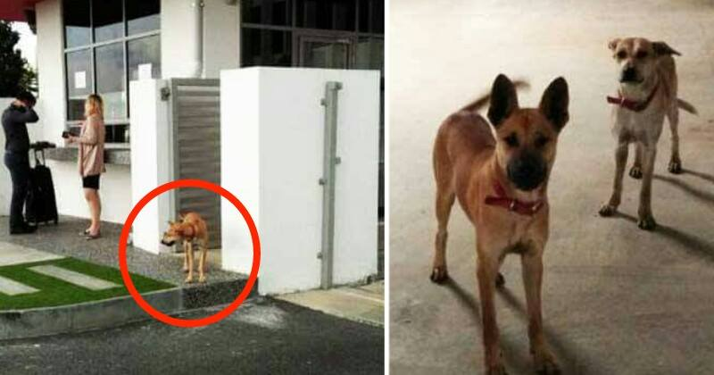 Malaysians Are Crazy Over How Air Asia Adopted Stray Dogs In Their Headquarters - World Of Buzz