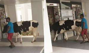 Cow Spotted Entering Singapore Apartment's Elevator, Netizens Freak Out - World Of Buzz 5