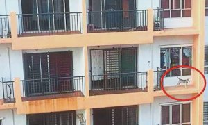Dog Left on Ledge in Taman OUG High Rise Apartment Building - World Of Buzz 2