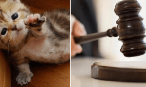 Malaysian Man Gets Charged in Court Just Because He Wanted to Keep His Kitten - World Of Buzz 4