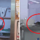 Several RATS Spotted Running Around Secret Recipe's Kitchen, Netizens - World Of Buzz 2