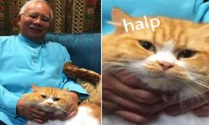PM Najib Tweets Picture with His Cat, Malaysian Netizens Go Crazy - World Of Buzz
