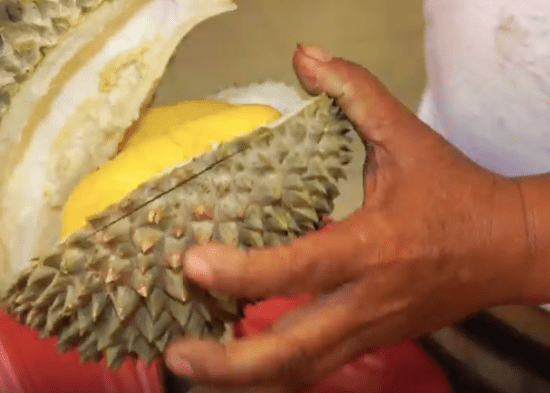 Tips in Identifying Musang King - World Of Buzz 2