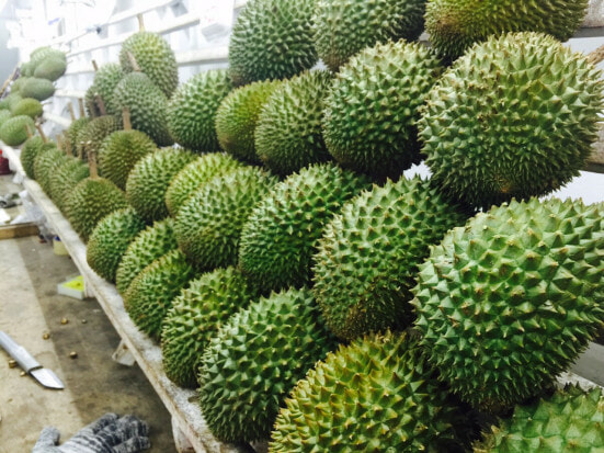 Tips in Identifying Musang King - World Of Buzz 4