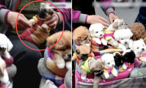 Viral Video Shows Puppies Tightly Wrapped in Cloths are Sold Like Toys on Street - World Of Buzz 1
