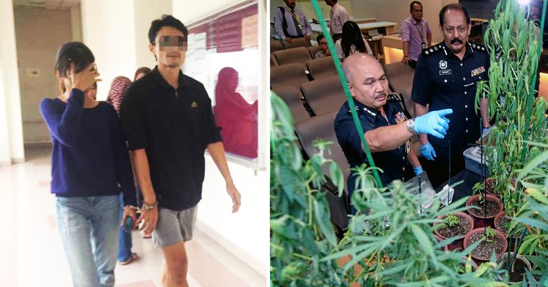 Couple Caught Growing 38 Ganja Plants in Puchong Condo Faces Death Penalty - World Of Buzz 4