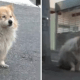 Little Dog Waits Patiently for 3 Years for Sick Owner Who is Never Coming Back - World Of Buzz 4