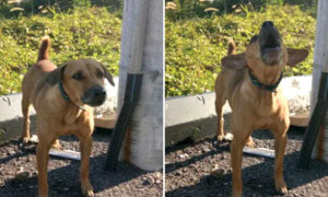 Abandoned Dog Faithfully Waits for Owner, Even After Attacked by Strays at Night in Taiping - World Of Buzz 1