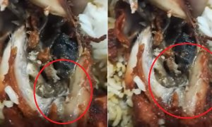 Malaysian Lady Disgustingly Finds Worms Wriggling in Fried Chicken from Kuantan Mamak - World Of Buzz 2