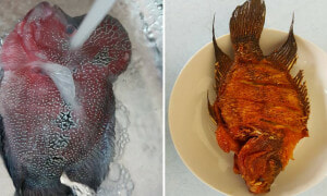 Malaysian Man Fries RM2,800 Flowerhorn Fish, Criticised by Angry Netizens - World Of Buzz 8
