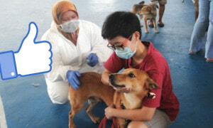 Malaysians Salute Muslim Veterinary Officers For Holding Dogs to Vaccinate Them - World Of Buzz