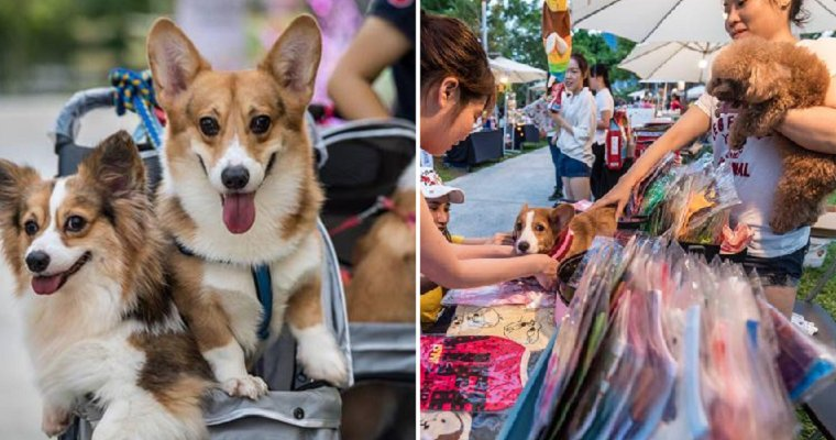 Play With Cute Doggies at this Monthly Pet Bazaar in Desa Park City! - World Of Buzz