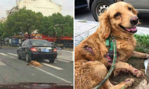 Man Drives Car, Unaware He Was Dragging Pet Dog On The Road - World Of Buzz 4