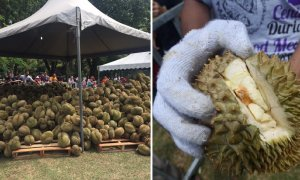 Massive Durian Event Cancelled Due to Unripe Fruit, Organisers Sell at RM12/kg! - World Of Buzz