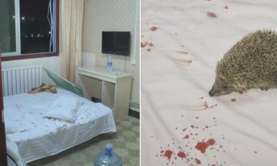 Guests Bizarrely Find Hedgehog in Hotel's Pillow After Pricking Woman's Butt - WORLD OF BUZZ 4