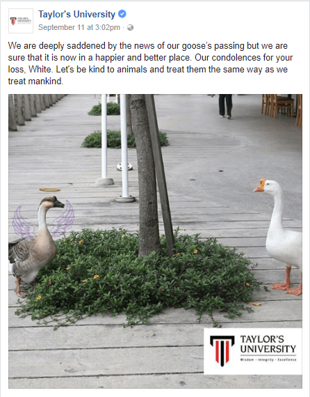 One Of The Geese From Taylor's University Just Died And Students Had A Memorial For It - World Of Buzz 10