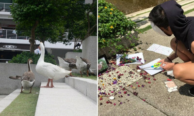 One of The Geese from Taylor's University Just Died And Students Had a Memorial For It - WORLD OF BUZZ 11