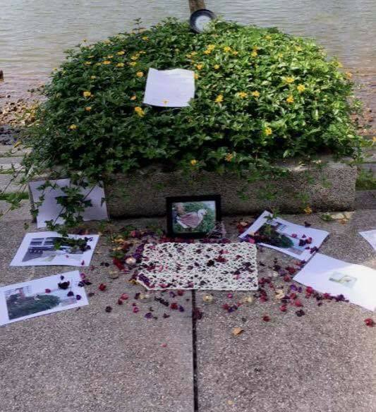 One Of The Geese From Taylor's University Just Died And Students Had A Memorial For It - World Of Buzz 4